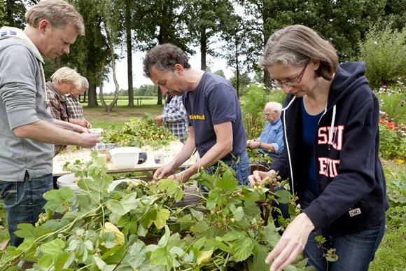 Maar liefst 25 vrijwilligers hielpen om de hopbellen te oogsten
